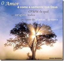 o amor é como semente que Deus criou da qual se origina todos os tipos de plantas e árvores